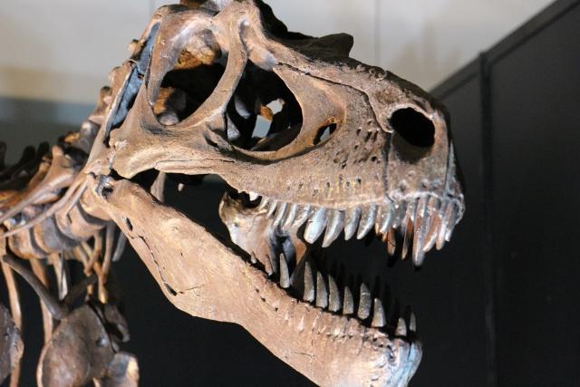 ロシアの炭鉱で恐竜の目撃?蚊の吸った血液からDNAが採取できる話